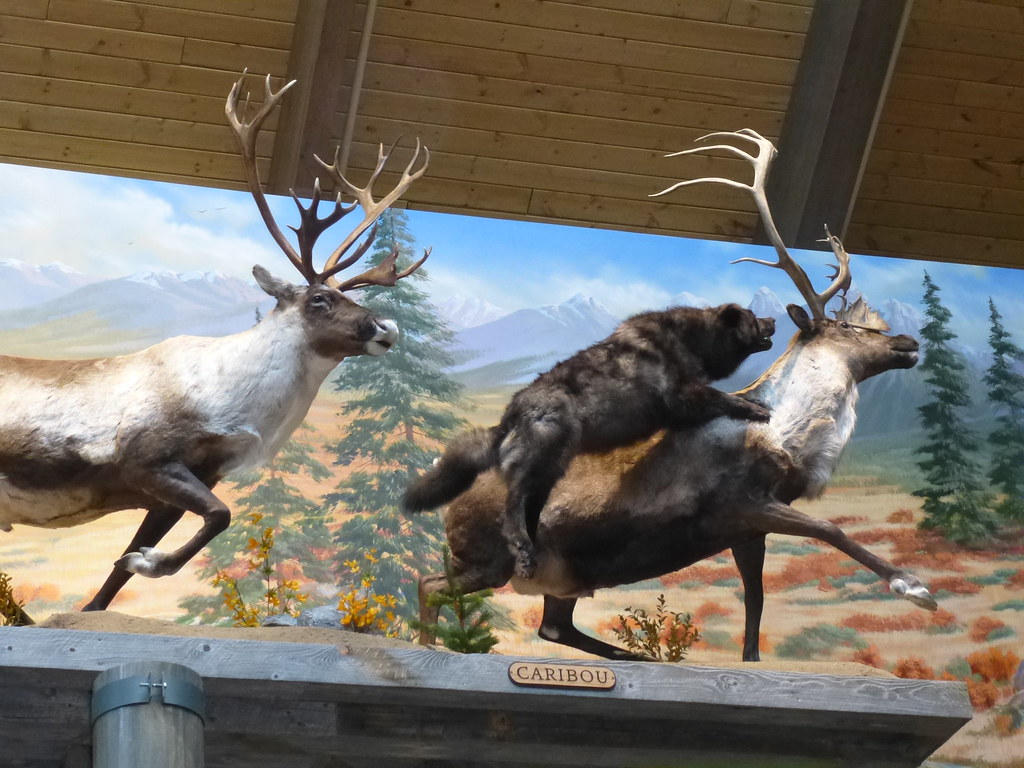 The world 39 s best photos of diorama and elk flickr hive mind for Deer duck fish