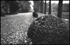 box (ha*voc) Tags: park bw film garden bokeh rangefinder 35mmfilm ilfordxp2super breukelen nijenrode leicam5 voigtlandernokton35mmf14