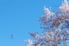 Blossoms muthaphuka (1 of 3)