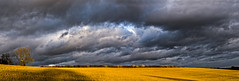 Storm Light Panorama (asheers) Tags: sky storm tree field clouds cloudy stormy