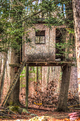 Treehouse (Jerri Moon Cantone) Tags: leaves woods treehouse ladder hdr