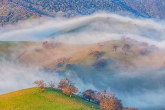 (Marc Crumpler (Ilikethenight)) Tags: landscape california bayarea eastbay contracostacounty losvaqueros marccrumpler sunrise fog trees hills hiking canon canon6d 6d 24105mmf4l