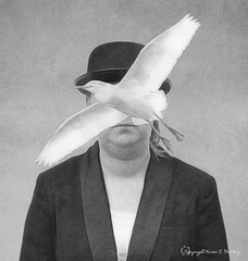Lady in a Bowler Hat (Little Hand Images) Tags: lady girl woman female bowlerhat bird egret jacket magritteish surrealism monochrome blackandwhite ladyinabowlerhat paintedfilter