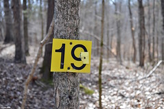 Nineteen (Jake (Studio 9265)) Tags: taylorsville lake state park ky kentucky usa united states america nikon d5000 woods trees forest winter february 2017 trail marker tree yellow nineteen 19 cracked old broken place destination