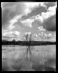 Marsh Tree 1704xx (jimhairphoto) Tags: deardorff 8x10 300mm schneiderlens portland oregon america pdx portlandnw remainsoftheday naturalworld stjohns floatingworld film 8x10film ilford fp4 blackandwhite blancetnoir schwarzeaufweis blancoynegro blancinegre siyahrebeyaz jimhairphoto