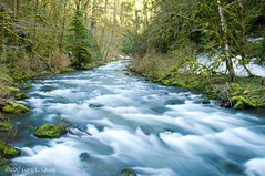 Tanner Creek, Columbia Gorge, Spring 2017 (Gary L. Quay) Tags: tanner creek oregon columbia gorge wahclella falls trail spring march 2017 gary quay