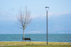 bench with view (phacelias) Tags: bench bankje panchina view vista uitzicht castiglionedellago lagoditrasimeno