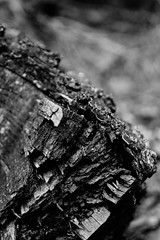 tree (Maschenka77) Tags: tree baum stamm stem trunk borke periderm bark black schwarz white weis wald forest natur nature details close up nahaufnahme nah