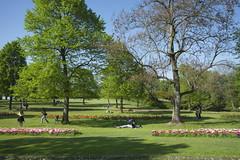 _DSC0830 (Riccardo Q.) Tags: parcosegurtàtulipani places parco altreparolechiave fiori tulipani segurtà
