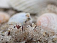 little snail shell (nirak68) Tags: timmendorferstrand ostsee schleswigholstein deutschland sand makro 7dwf muscheln schneckenhaus 52of2017 42