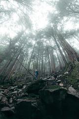 Respite (crgshpprd) Tags: beautiful british columbia squamish pnw pacific north west rain snow cloud cover snowfall gondola hike trail spring forest