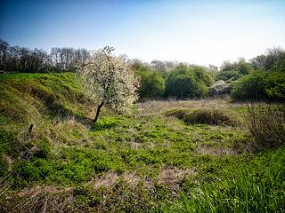 Spring in Wilderness