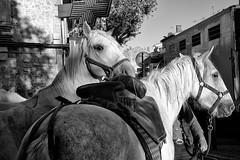 Dans-les-rues-d'Arles-2 (RS...) Tags: arles chevaux horses noiretblanc blackandwhite rue street d7200 chevaldecamargue