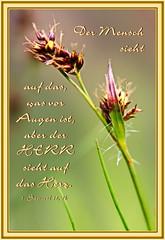 Aber der Herr ... / But the LORD ... (Martin Volpert) Tags: mavo43 blüte blumen flor cvijet kvet blomster flower floro õis lore kukka fleur bláth virág blóm fiore flos žiedas zieds bloem blome kwiat floare ciuri flouer cvet blomma çiçek pflanze christentum christian christianity bibel bible herz augen eye heart mortals menschen outwardappearance