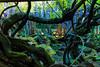 DSC_1597 (sayo-tsu) Tags: 埼玉県 春日部市 kasukabe saitama wisteria 藤 特別天然記念物 牛島のフジ