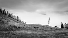 ..:: a lonely shack on the hill ::.. (bora_binguel) Tags: blackwhite shack österreich nature austria bobidigitalphotography schwarzweiss wald natur kärnten avusturya hütte orman kulübe aufdenbergen hill hügel doğa forrest tepe