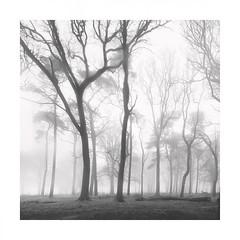 Winter fog (Nick green2012) Tags: trees misty woodland minimal square blackandwhite landscape