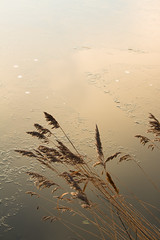 20170116-Canon EOS 750D-0581 (Bartek Rozanski) Tags: hazerswoudedorp zuidholland netherlands nature hazerswoude greenheart groenehart reed gold ice reflection monochrome abstract holland nederland polder