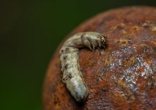 ex-caterpillar