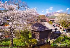 Spring is here! This is the season I like best in Japan. (kota-G) Tags: season spring fuji 忍野村 japan scenery landscape nikon oshinomura 桜 sakura cherryblossoms 春 flower