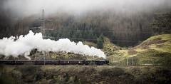 The Scots Guardsman (TrotterFechan) Tags: scotsguardsman steamtrain steam train locomotive