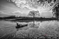 _U1H9673 Tam Giang,Yen Phong,Bac Ninh 0417 (HUONGBEO PHOTO) Tags: sigma1224mm canoneos1dsmark3 ảnhđentrắng bắcninh yênphong tamgiang bếnđòngãbaxà câygạo mùahoagạo asia photography peaceful countryside bw beautiful vietnamscenery clouds boat redsilkcottontree tree outdoor