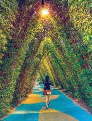 Beyond (jaywu429) Tags: landscape sunshine sony1635 sonya7r sony walking trees outdoor sun love people gardensbythebay marinabay singapore lights city explore