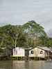 The jungle (Alveart) Tags: amazonas selva jungle southamerica amazonbasin theamazon suramerica latinamerica latinoamerica alveart luisalveart selvainundable invierno naturaleza leticia rioamazonas amazonriver colombiaamazonas