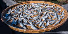 2016 - China - Yellow Mountain - 16 of 27 (Ted's photos - Returns Mid May) Tags: 2016 china cropped huangshan tedmcgrath tedsphotos vignetting yellowmountain fish deadfish dryingfish tray wickertray wicker huangshanchina
