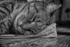 ...HardDay... (7H3M4R713N) Tags: fujifilm xt2 fujinonxf35mmf2 monochrome fuji cat cats fluffy grafitithecat onthefloor nap naptime suisse switzerland swiss bw noiretblanc blackandwhite blackwhite