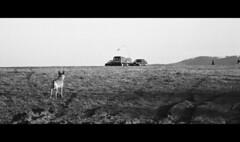 In The Frame (doctorspider42) Tags: analog film 35mm bergger pancro 400 canon eos 50e kodak d76 homemade bielskobiala