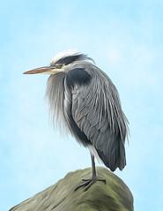 Heron Painting (Linda Cochran) Tags: greatblueheron heron bird painting digitalpainting photopainting iphone7 procreate