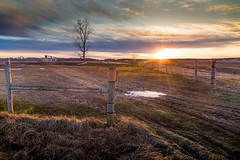 soggy field (Christian Collins) Tags: fence sundown sunset puestodelsol field campo puddle soggy wet tree track tracks fencepost wirefence canoneos5dmarkiv