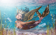 Nariella (meriluu17) Tags: astralia mermaid merqueen underwater water sea ocean fantasy siren creature surreal magical
