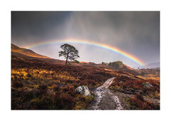 Affric Rainbow (Vemsteroo) Tags: glenaffric lochaffric outdoors exploring glorious beautiful scotland storm rain april showers rainbow dramatic epic caledonianpine scots path colourful weather visitscotland visitbritain landscape canon 5d mkiii 24mm tse prime leefilters circularpolariser highlands