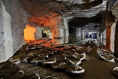Champignonnière (flallier) Tags: carrière souterraine calcaire underground limestone quarry champignonnière mushroomcultivation sacs silhouette galeries tunnels