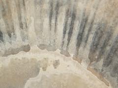 Nature as Abstract Artist (Fredrik Wold Kolnes) Tags: fjæra hav art nature abstract natur rays stråler skjell beach ocean artist norge tromsø muted patern mønster nordnorge abstrakt shell noorwegen noruega norvegia norvegio norvège norway norwegen норвегия นอร์เวย์ ノルウェ 挪威