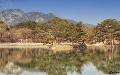 Summer Garden - Gyeongbokgung Palace (cattan2011) Tags: gyeongbokgungpalace gardens korea southkorea natureperfection naturephotography nature traveltuesday travelbloggers travelphotography travel mountainscape mountains waterscape landscapephotography landscape
