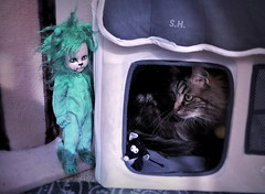 'Don't worry Mousey, that Lion is a Scaredy Cat!* (pianocats16, miau...) Tags: cowardly lion teddy lost oz mezcotoyz green variant living dead dolls cat kitty cute house mouse