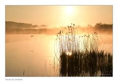 Marais de Goulaine (Bruno-photos2013) Tags: maraisdegoulaine marais loireatlantique bretagne brume brouillard france foggy roseaux canard paysageligérien paysage leverdujour sunrise landscape