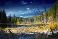 Forest and Frost Dream (John Andersen (JPAndersen images)) Tags: beaverpond bluesky creek elbowfalls kananaskis landscape logs morning snow springs trees water