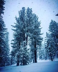 16903431_10155034114231950_217348485777257799_o (Ashly Edwards Huntington) Tags: huntington tahoe snow water ice forest heavenly cool storm edwardshuntington ashlyedwardshuntington branch christmas winter pinetrees trees ents snowstorm