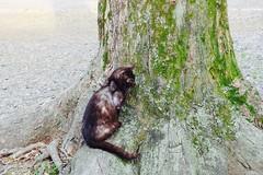 Today's Cat@2017-04-18 (masatsu) Tags: cat thebiggestgroupwithonlycats catspotting pentax mx1
