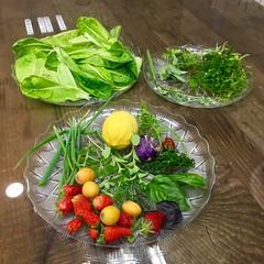 Daily Harvest (Assaf Shtilman) Tags: daily harvest purple kohlrabi lemon loquats strawberries chives shallot herb mint sage dill parsley lettuce