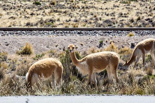 Peru_BasvanOortHR-95
