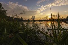 Abendstimmung am Fluss (tan.ja1212) Tags: sonnenuntergang sunset sonne sun wolken clouds himmel sky schilf reed schatten shadow bäume trees pflanzen wasser water spiegelung reflection