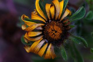 Plant, Flower (Macro)