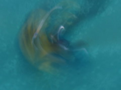 The marbles in motion - 53 (Marguerite-Helene) Tags: marble bille flou vitesse blur intentionalblur macromondays