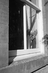 Window toy (Man with Red Eyes) Tags: kodak trix hc110 leicam2 summicron35mmf2 analog blackwhite monochrome silverhalide sunnysixteen northumberland northumbria alnwick v850 toy window frame shadow