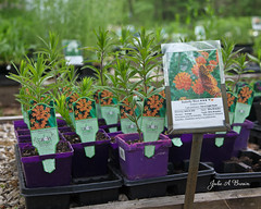 Missouri Wildflower Nursery 4 (julieabrown1) Tags: spring missouri wildflower 203 jeffersoncity missouriwildflowernursery